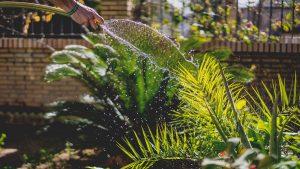 Quand arroser son jardin ?