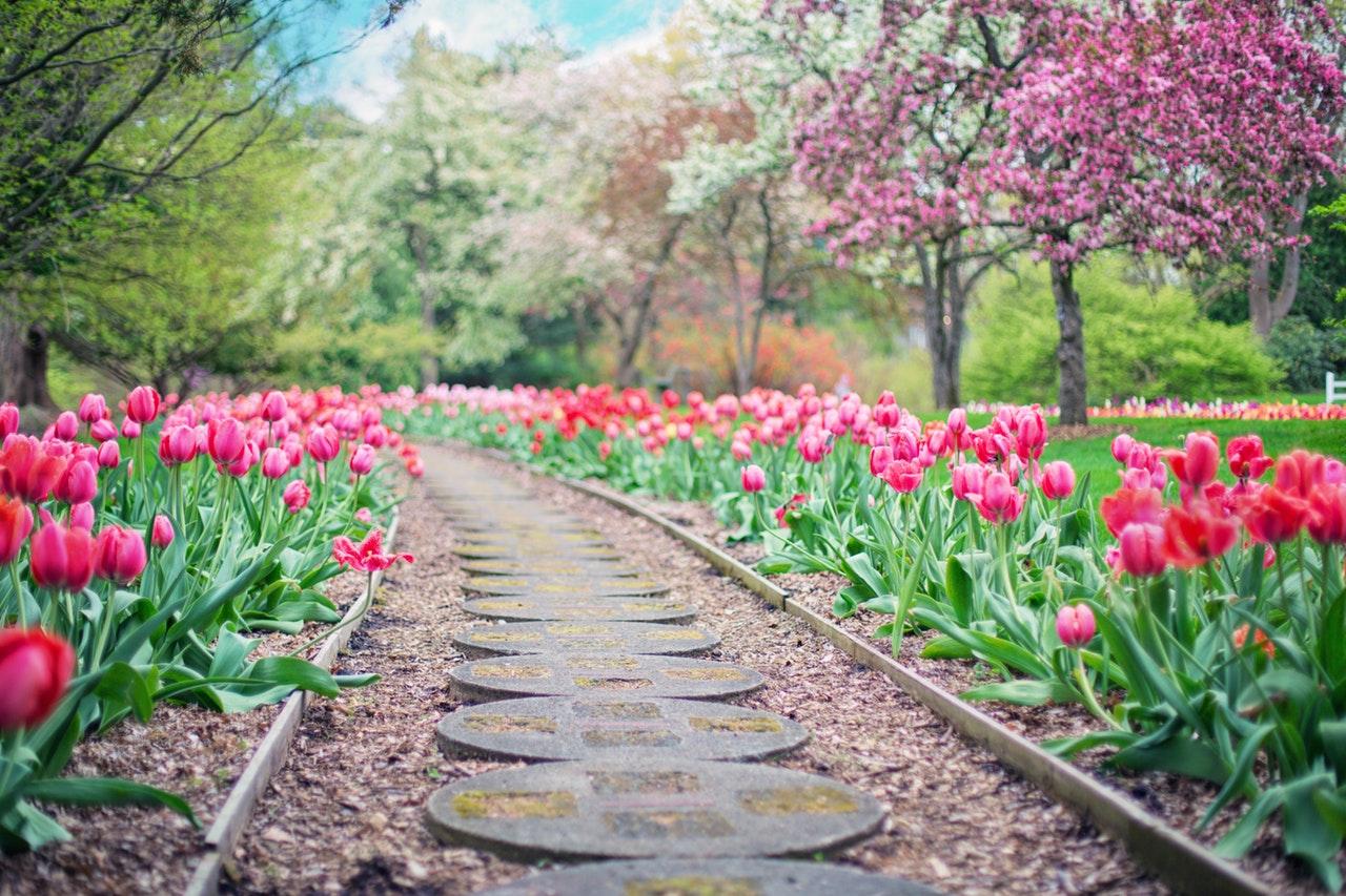 belles fleurs jardin
